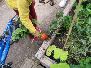 Community gardens: an alternative to global food production and consumption